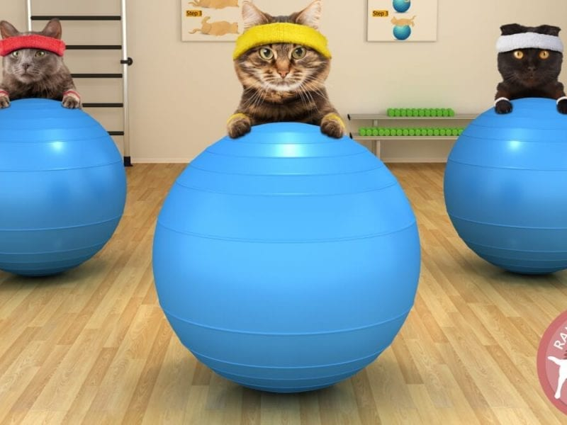 Feline Physiotherapy